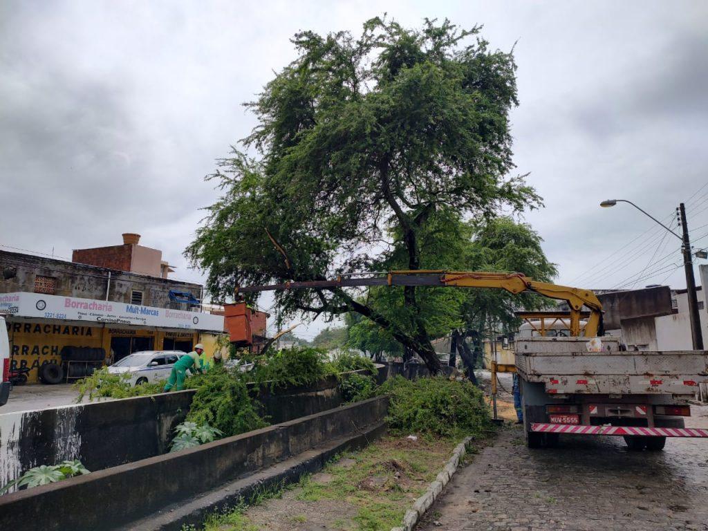 Poda de árvore foi intensificada pela Sudes durante esta semana. Foto: Ascom Sudes