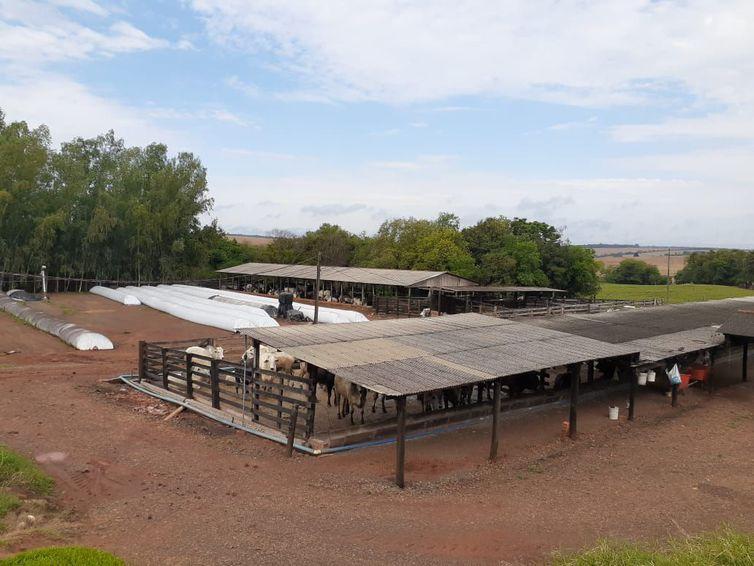 Produção do biogás na granja Colombari